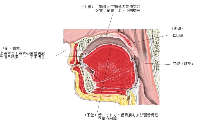 oral-cavity-9.jpg