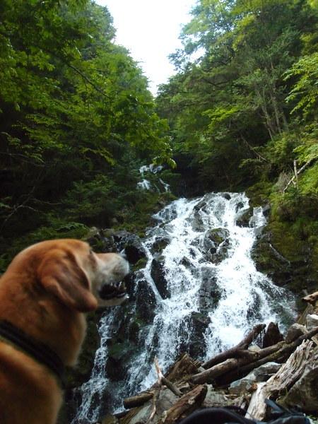 焼山沢の滝