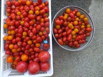 ドライミニトマト5
