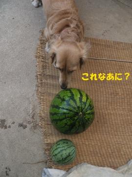 虫や野菜や果物5