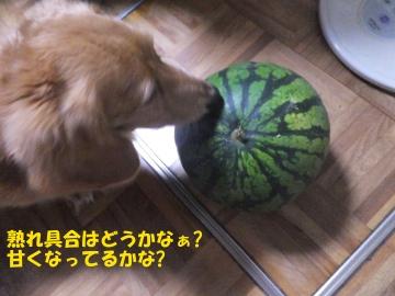 虫や野菜や果物6