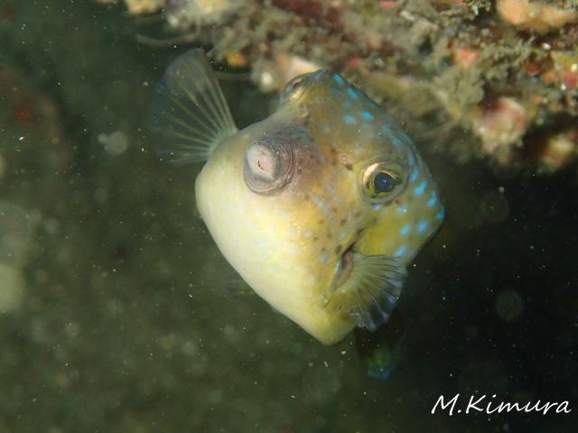 26_0711boxfish.jpg