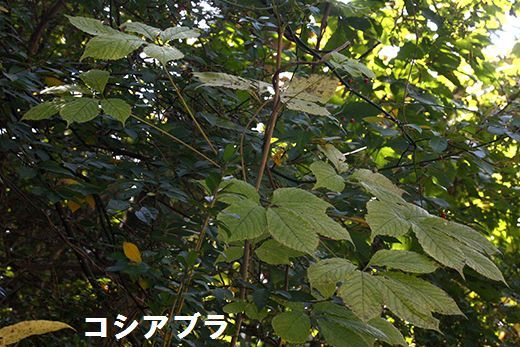 IMG_0700.jpg
