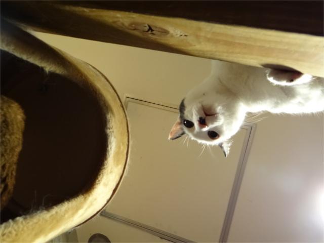 猫の平均寿命って何歳?