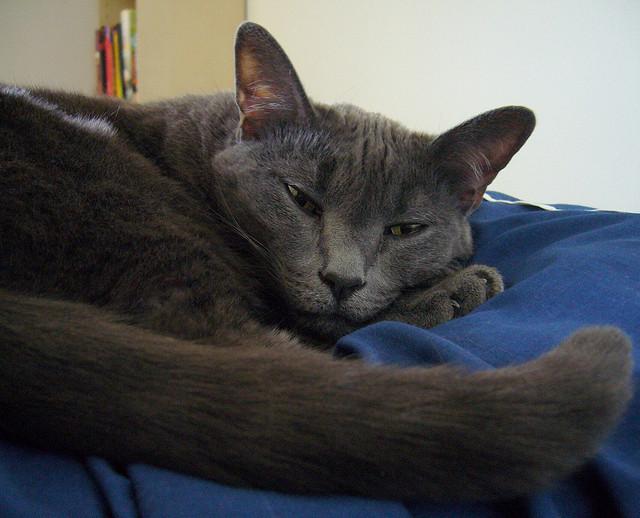 怒ってる?喜んでる?猫のシッポを見てご機嫌チェック!