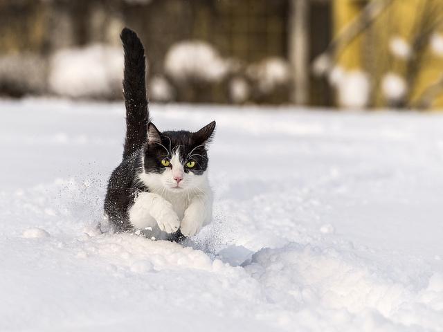 ウサイン・ボルト vs 猫、速いのはどっち?
