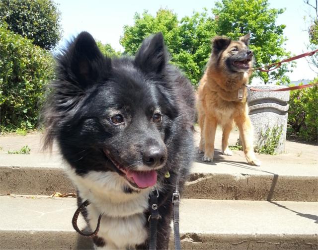 犬と猫の祖先は同じ動物だった!