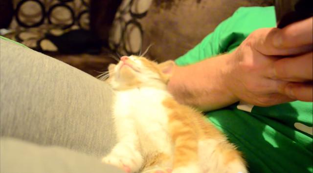 必死に眠気こらえるネコの動画が100万アクセスを超える話題に