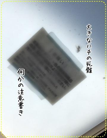 2015080707.jpg