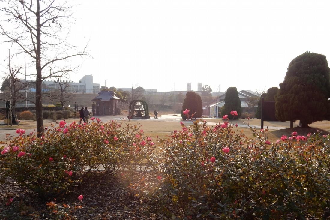 2014-12-30淡路島徳島 105