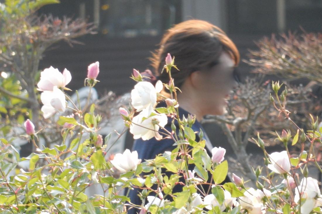 2014-12-30淡路島徳島 098