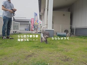 館山ランチ20150628-8