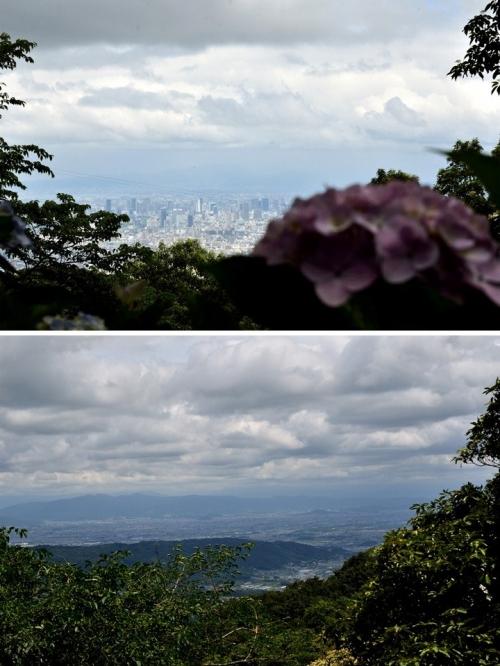 額田園地紫陽花(5)