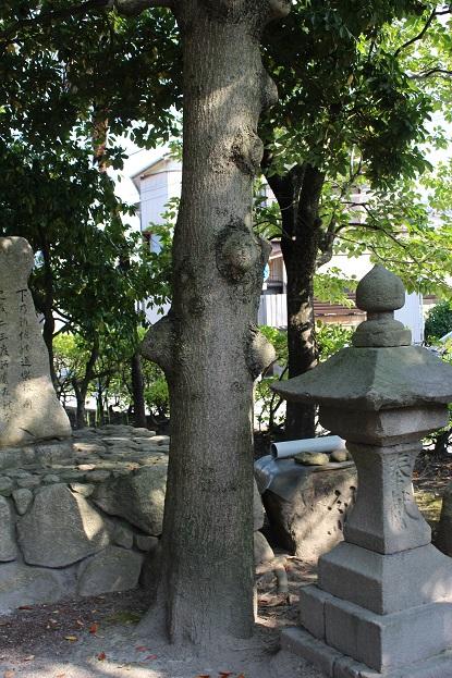 20150714新潟旅行:湊稲荷神社 木