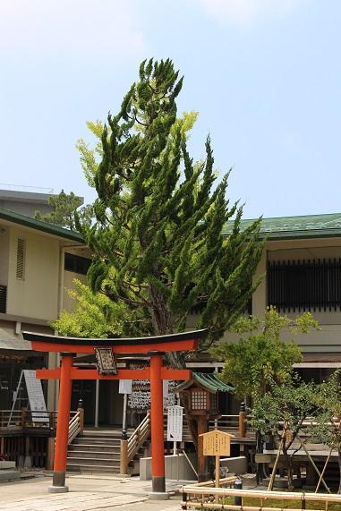 20150714新潟旅行:白山神社 木