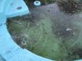 氷の張った池と戦う