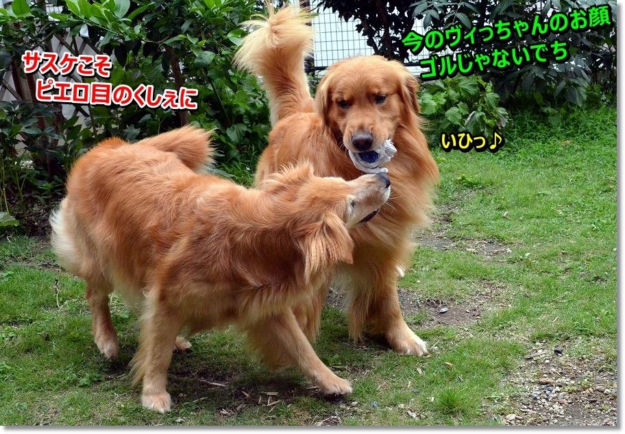DSC_0459_20150710111328052.jpg