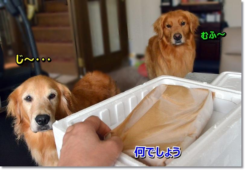 DSC_0956_20150801231758bea.jpg