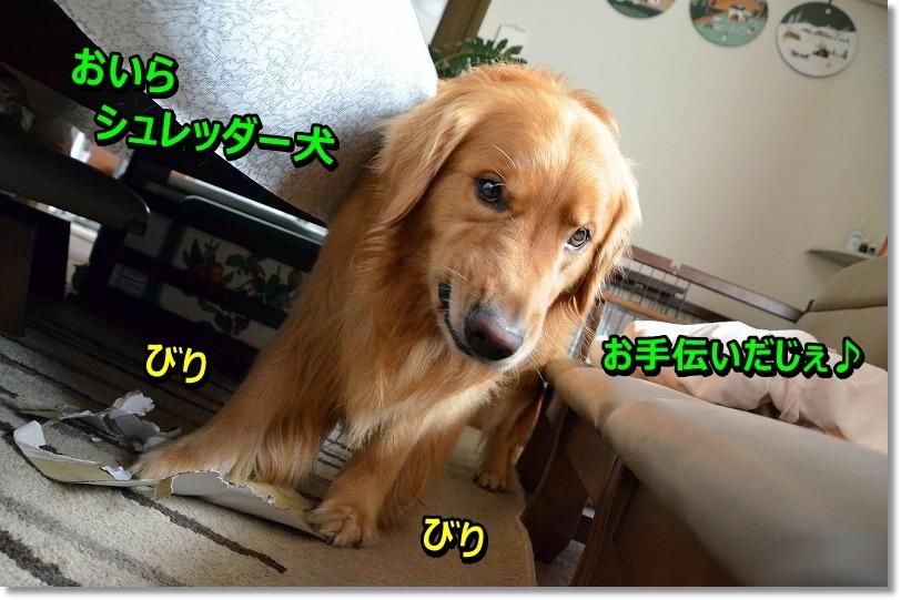 DSC_0963_20150801231832499.jpg
