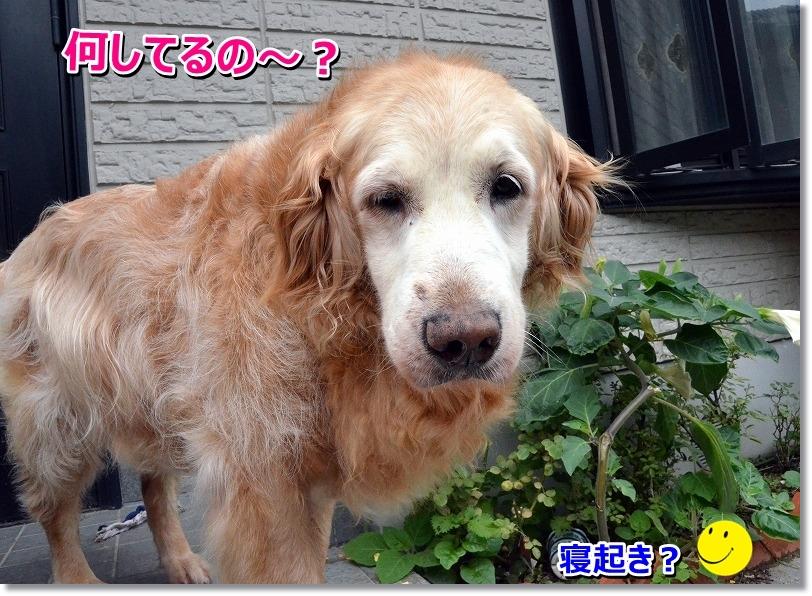 DSC_0970_20150801231855aa0.jpg