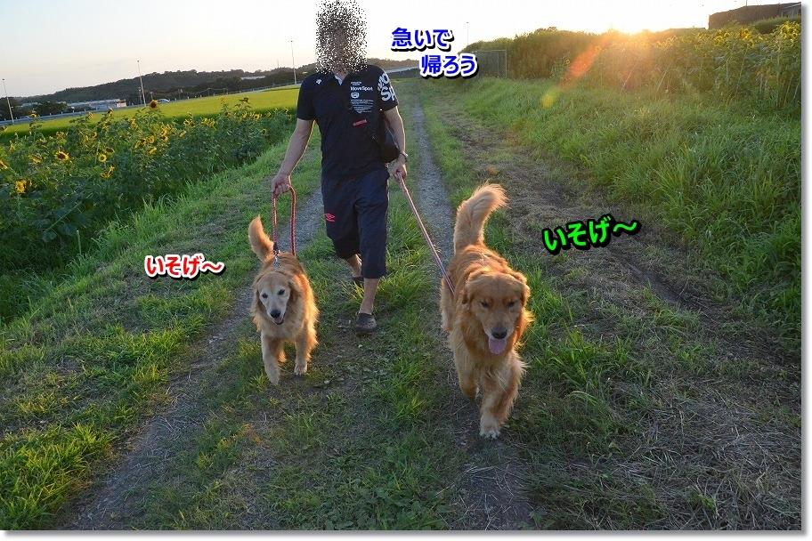 DSC_1324_201507241110355a3.jpg