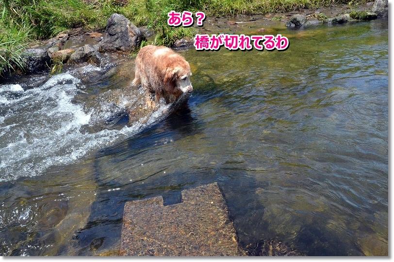 DSC_2195_20150808122512d24.jpg