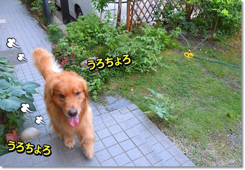 DSC_2381_20150803224529cdb.jpg