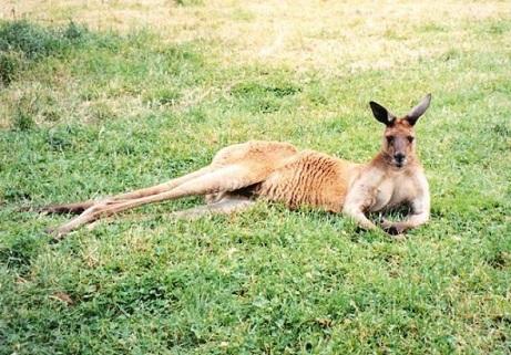 オーストラリア3