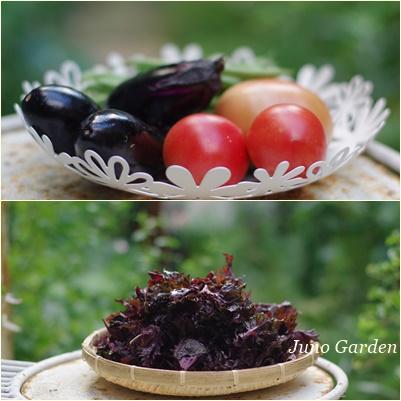 野菜150628
