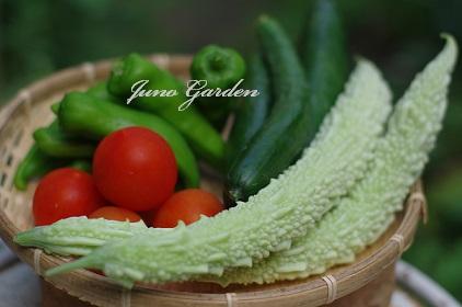 野菜150731