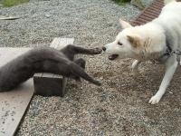 あー猫背が気持ち良い1