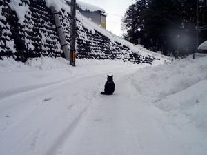 雪の中央猫