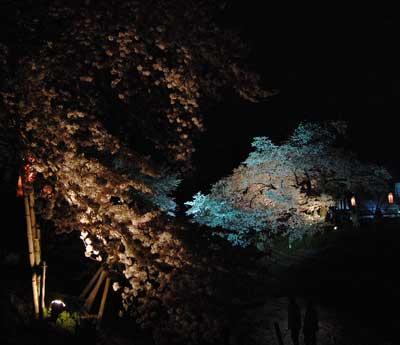 15.4.4川路桜2