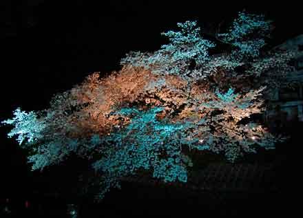 15.4.4川路桜