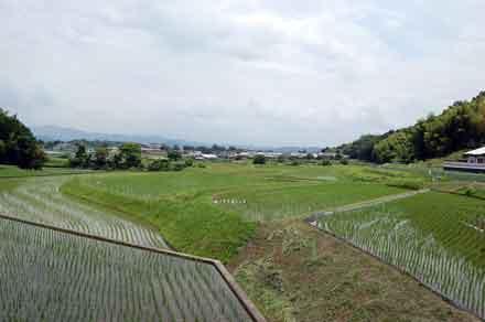 15.6.23田園風景