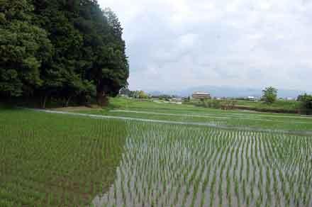15.6.23水田風景