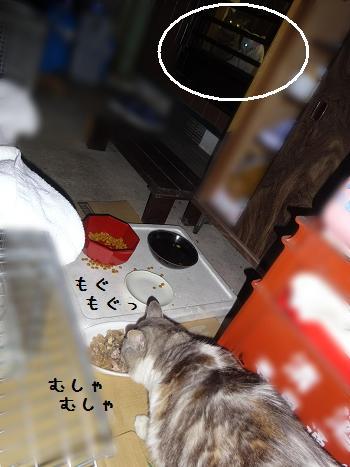 ベルご飯withボンてん