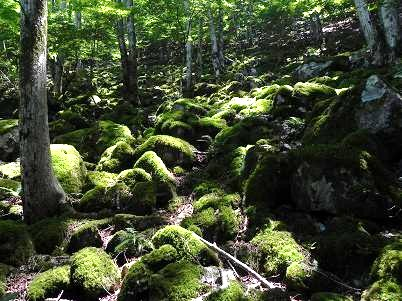 ウノタワへの谷の苔岩地帯