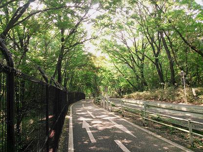 雑木林に覆われた道