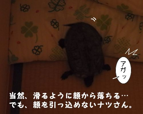 20150706-03.jpg