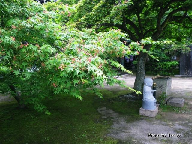 木の下のお地蔵さん