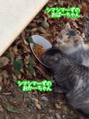 150806_1411_oyako.jpg
