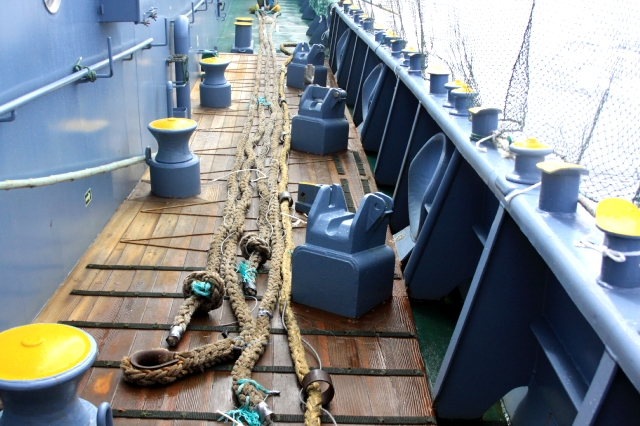 (一財)日本鯨類研究所提供プロップファウラー