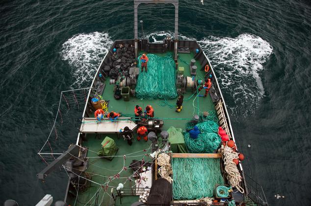 マゼランアイナメのかかった網を回収するシーシェパード