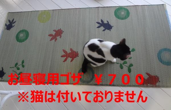 DSC03681.jpg