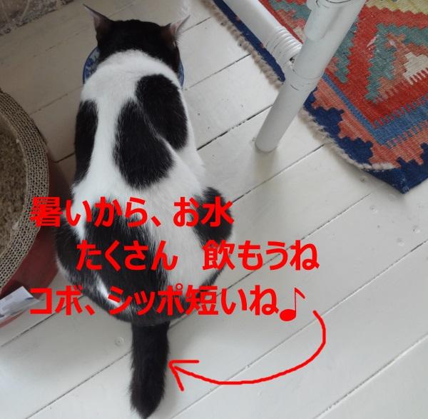 DSC03757.jpg