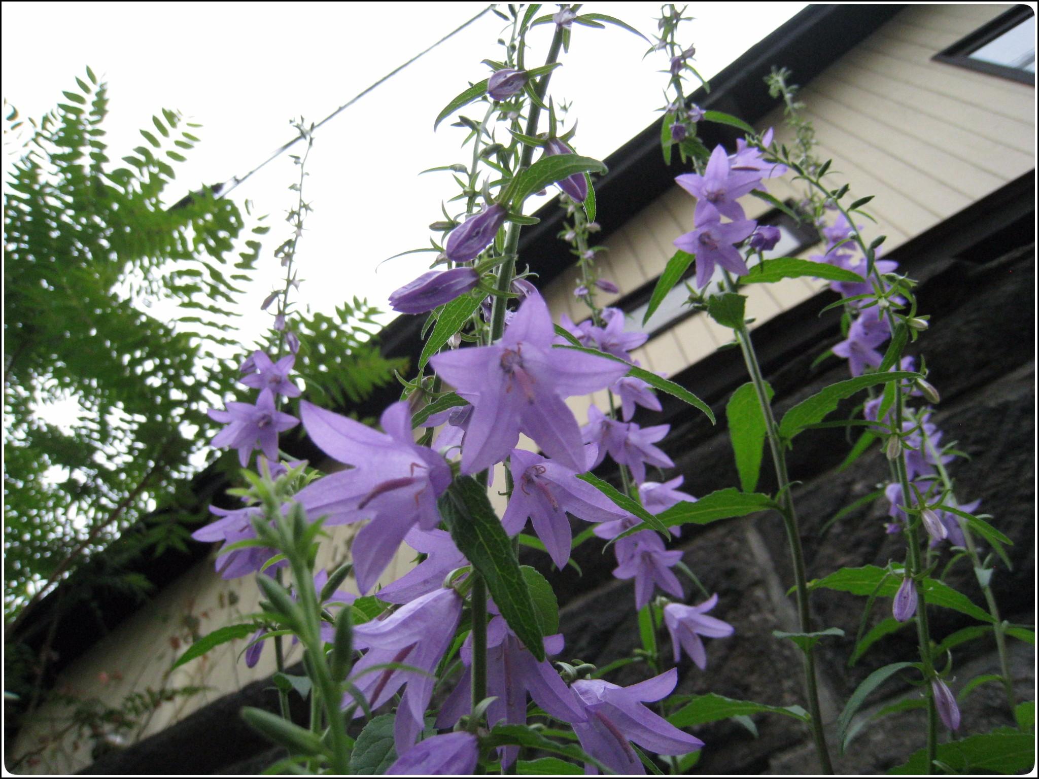 fujiirohana_2_708.jpg