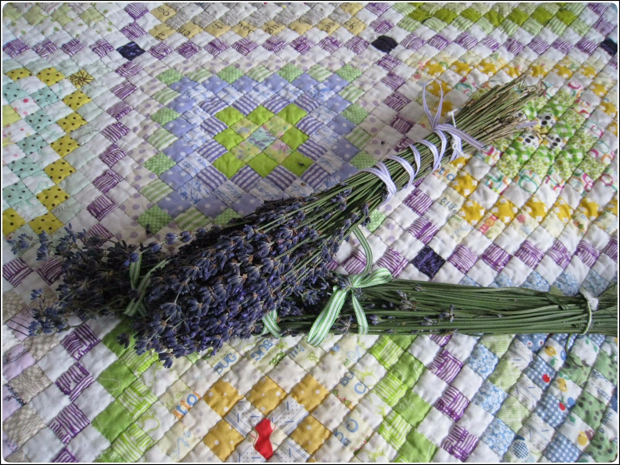lavendar_2_718.jpg