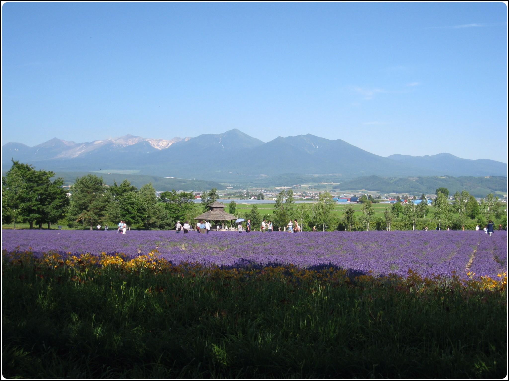 lavender_6_717.jpg