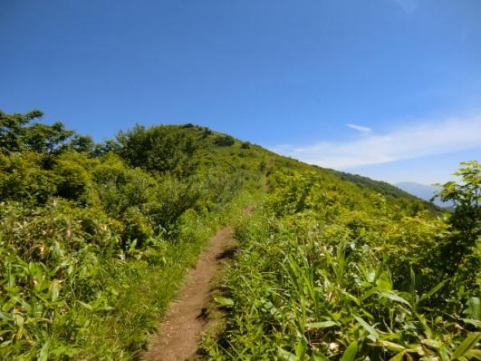 樹林帯を抜け山頂へ